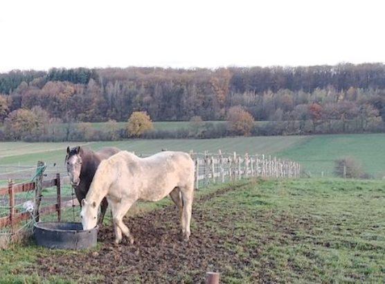 Deux chevaux Lavaux – copie